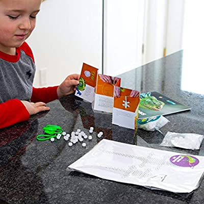 Fat Brain Toys Surprise Ride - Make UV Bead Chameleons Arts & Crafts for Ages 5 to 12: Toys & Games