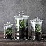 Mini Glass Apothecary Jars-Cotton Jar-Bathroom