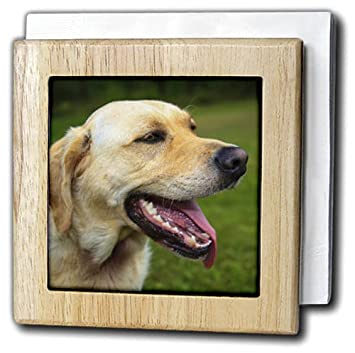 3dRose Danita Delimont - Dogs - Canada, Nova Scotia, Cape Breton, Labrador retriever