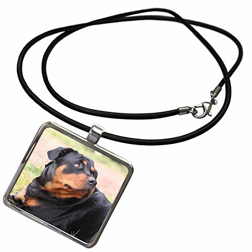 Rottweiler Pendant (3dRose Dogs Rottweiler - Rottweiler - Necklace With Rectangle Pendant (ncl_4370_1))