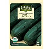 Seeds of Change 05882 Certified Organic Seed, Saber F1 Cucumber