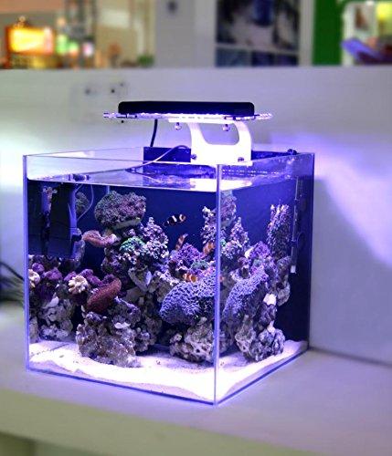 LED licht korallen wachsen meerwasser riff tank wei? blau aquarium SPS LPS farbe wachsen ZET licht