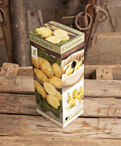 Yukon Nugget Seed Potatos ()