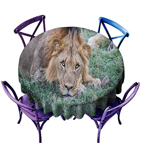 Acelik Round Tablecloth,Male Lion Starring at The Camera,Table Cover for Home Restaurant,63 INCH