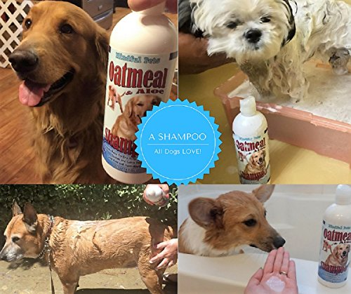 Mindful Pets Oatmeal Dog Shampoo, Hypoallergenic, Antifungal, 16 Ounce