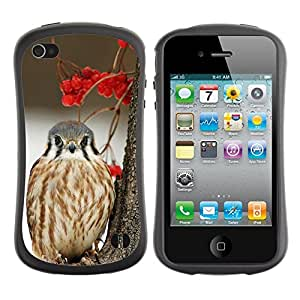 Paccase / Suave TPU GEL Caso Carcasa de Protección Funda para - winter berries snow bird hawk prey - Apple Iphone 4 / 4S