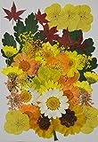 Handi-KAFU Yellow Viola,Hydrangea,Maple Leaf,Sanvitalia Real Pressed Dried Flowers