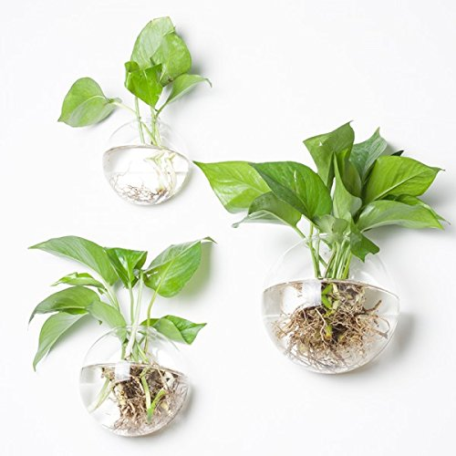 Wall Planters for Indoor Plants: Amazon.com