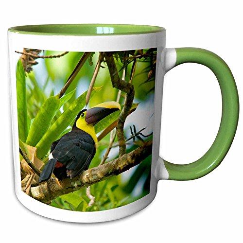 3dRose Danita Delimont - Tropical Birds - Chestnut-mandibled Toucan, tropical bird- SA22 AMR0034 - Andres Morya Hinojosa - 15oz Two-Tone Green Mug (mug_141704_12) ()