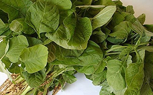 (Green Amaranth Round Leaf Seeds - Harvested 30 days after sowing! Very Tender!!!(100 - Seeds) )