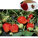 Strawberry Seeds for Growing, Easy & Fast Grow Plants Potted Fruit to Eat for Home Farm Backyard Garden Balcony 500 Seeds