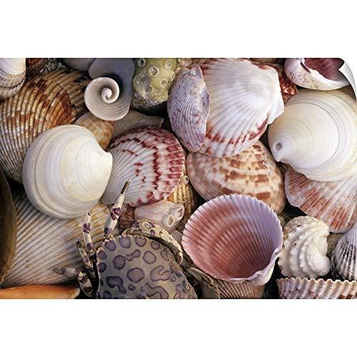 - Canvas on Demand Wall Peel Wall Art Print Entitled Sea Shells, Crab, Coral and barnacles 36