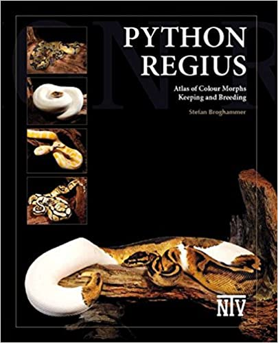 Amazon com: Python Regius - Atlas of Color Morphs, Keeping