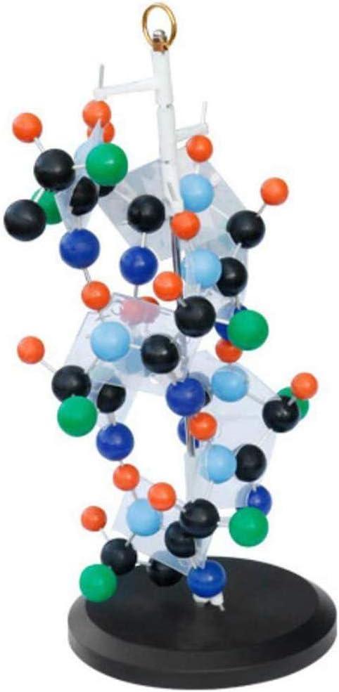 HYCy Modelo de Estructura Secundaria de proteína, Modelo de ...