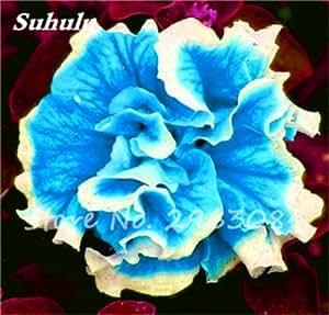 100 PC mezcladas Semillas de color flor de la petunia Petunia exóticas Semillas Bonsai pétalos de la flor de la petunia petunia del jardín semillas para jardín 15