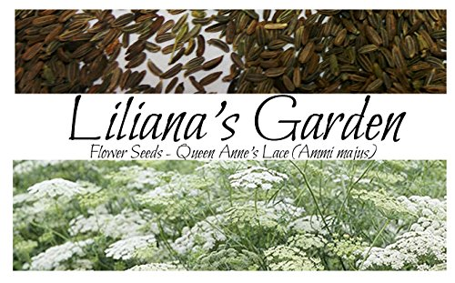 Flower Seeds - Annual Queen Anne's Lace - Ammi majus - Annual - Liliana's Garden (Lace Annes Queen)