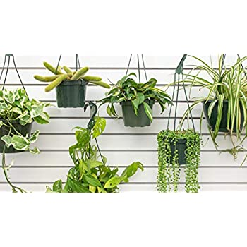 """Live Combo 4 Hanging Plant Fit 4/"""" Pot Easy to Grow Best Houseplant Best Gift"""