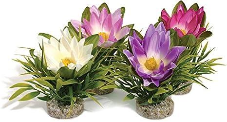 SYDECO flor de loto Acuario Planta - Single: Amazon.es: Productos para mascotas