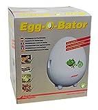 Lucky reptile Egg-O-Bato