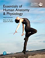 Essentials of Human Anatomy & Physiology, Global 12th Edition Front Cover