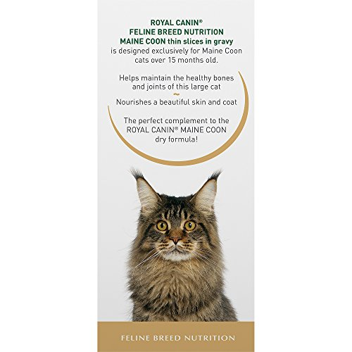 royal canin feline breed nutrition maine coon thin slices in gravy canned cat food pack of 4 1. Black Bedroom Furniture Sets. Home Design Ideas