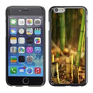 Paccase / SLIM PC / Aliminium Casa Carcasa Funda Case Cover - Bamboo Plant - Apple Iphone 6 Plus 5.5
