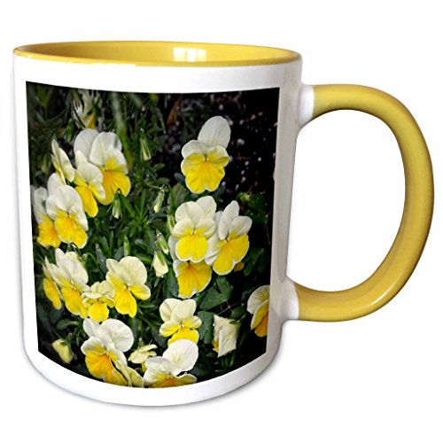 3dRose WhiteOaks Photography and Artwork - Pansy Flowers - Beautiful Yellow Pansies is a photo of beautiful yellow pansy flowers - 15oz Two-Tone Yellow Mug (mug_214183_13) ()