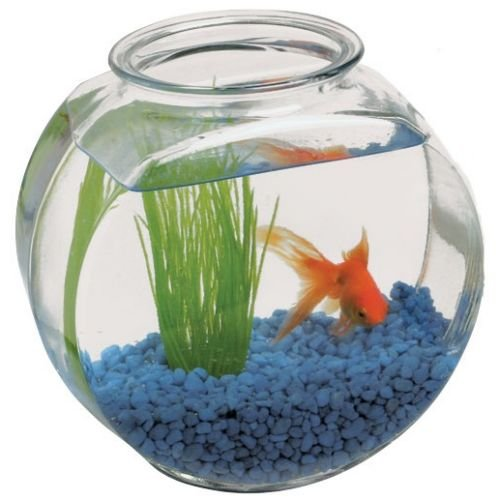 Anchor hocking clear glass drum fish bowl 2 gallon 6 for Fish bowl amazon