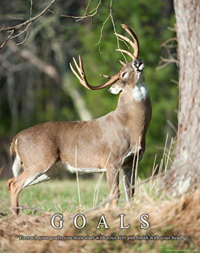 - Whitetail Deer Motivational Poster Art Print 11x14 Bow Hunting Buck Commander Wall Decor Pictures