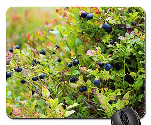 (Mouse Pad - Blueberries Heather Blueberry Plant Blue Food)