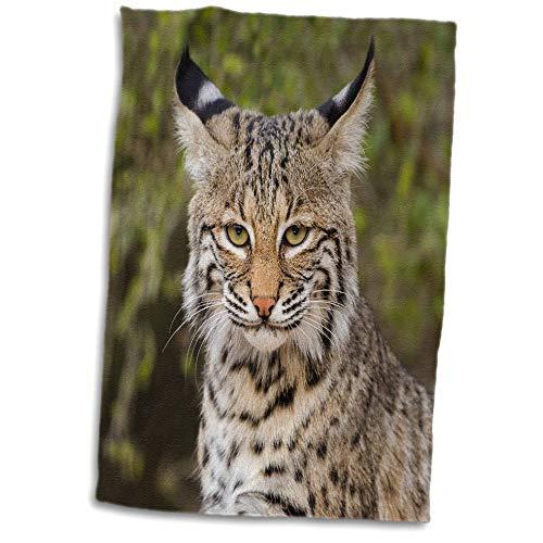 - 3dRose Danita Delimont - Mammal - Bobcat, Lynx Rufus, portrait. - 15x22 Hand Towel (twl_315032_1)