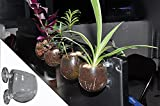 GRIVER Glass Plant Vase Window Planter,Suctions to Windows,Computer Monitors,Aquariums,Mirrors and other smooth surfaces (2, Glass Pot with Nutrient Soil)