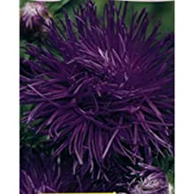 Double Violet Giant Aster Seeds Krallen Parsifal Annual Cutting Flowers