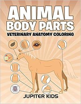 Animal Body Parts Veterinary Anatomy Coloring Jupiter Kids
