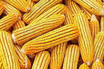 Bulk Corn Cobs for Wildlife Feeding (25 Pounds)