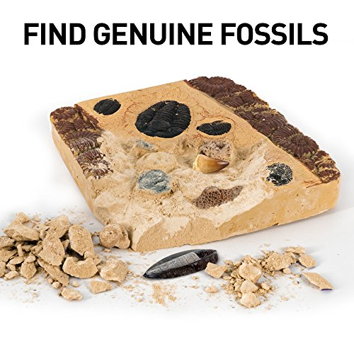 51hcue cdCL - NATIONAL GEOGRAPHIC Mega Fossil Dig Kit - Excavate 15 real fossils including Dinosaur Bones, Mosasaur & Shark Teeth - Great STEM Science gift for Paleontology and Archeology enthusiasts of any age