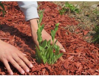 Virutas de madera coloridas Rojo para el jardín | 4 Bolsas de 50L 5m² | Envio Gratis: Amazon.es: Jardín