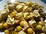 Heirloom Ground Cherry (Husk Tomto) Seeds by Stonysoil Seed Company