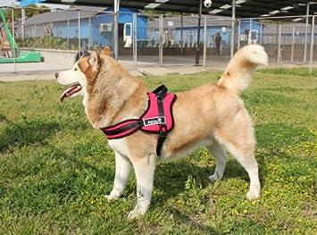 Big perro Golden Retriever powerharness suave no pull Arnés ...