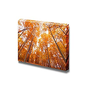 Canvas Prints Wall Art - Bright Yellow Tall Trees in Autumn Viewed from Bottom | Modern Home Deoration/Wall Art Giclee Printing Wrapped Canvas Art Ready to Hang - 24