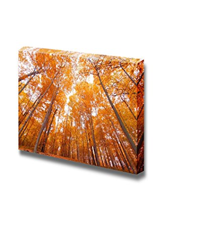 Bright Yellow Tall Trees in Autumn Viewed from Bottom Home Deoration Wall Decor ing ped