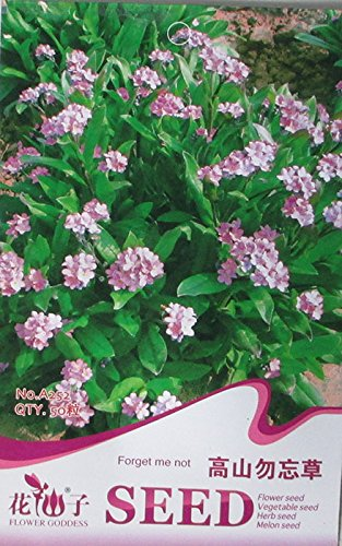 Amazon mountain light pink forget me not flower seeds mountain light pink forget me not flower seeds original pack 50 seeds pack mightylinksfo