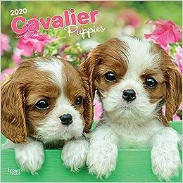 Télécharger livre Cavalier King Charles Spaniel Puppies 2020 Calendar pdf gratuit