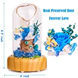 SWEETIME Blue Rose Lamp Real Preserved Rose in