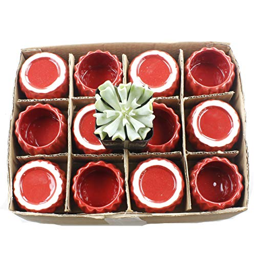 (Set of 12 Small 2-Inch Bright Accented Ceramic Planter Pots - Ideal for Single Stalk Roses or Flowers, Lucky Bamboo, Air Plants, or Small Succulents and House Plants)