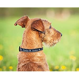 Pets First MLB NEW YORK YANKEES Dog Collar, Large
