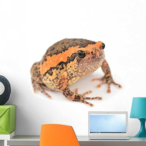 Wallmonkeys Bullfrog Wall Decal Peel and Stick Graphic WM14160 (24 in W x 16 in H)