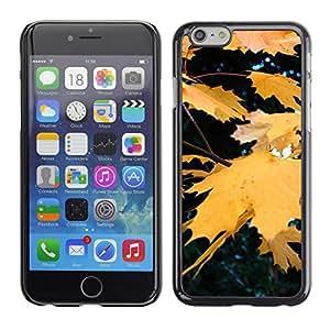 X-ray Impreso colorido protector duro espalda Funda piel de Shell para Apple iPhone 6 Plus(5.5 inches)- Fall Autumn Yellow Rain Tree Nature