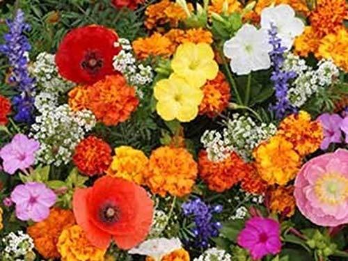 (480 Seeds Deer Resistant Flower Mix Seeds bin18)