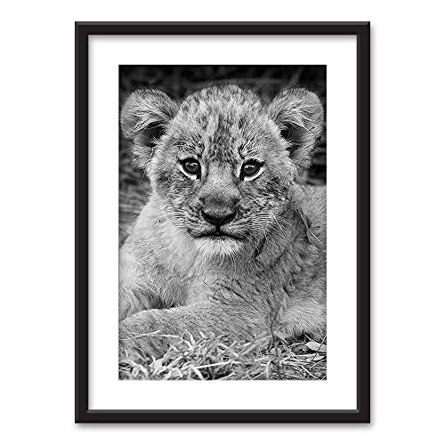 Framed A Lion Cub in Black White Black Picture Frames White Matting